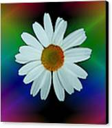 Daisy Bloom In Neon Rainbow Lights Canvas Print by ImagesAsArt Photos And Graphics