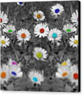 Daisy Rainbow Canvas Print by Mark Rogan