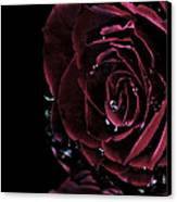 Dark Rose 2 Canvas Print by Ann-Charlotte Fjaerevik