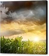 Dark Skies Looming Over Corn Fields  Canvas Print by Sandra Cunningham