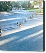 Davis Ducks Canvas Print by Cadence Spalding