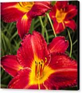 Day Lilies Canvas Print by Adam Romanowicz