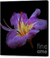 Daylily Bloom In The Dark Canvas Print by ImagesAsArt Photos And Graphics