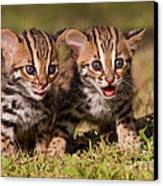 Dazed And Confused Canvas Print by Ashley Vincent