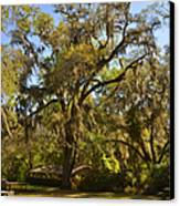 De Leon Springs - Classic Old Florida Canvas Print by Christine Till