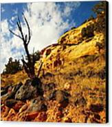 Dead Tree Against The Blue Sky Canvas Print by Jeff Swan