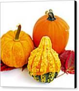 Decorative Pumpkins Canvas Print by Elena Elisseeva