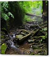 Deep In The Woods Canvas Print by Bill Cannon