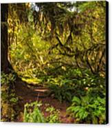 Deep Into The Hoh Rain Forest Canvas Print by Rich Leighton