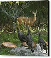 Deer And Wild Turkeys Canvas Print by Ron & Nancy Sanford
