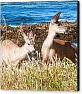 Deer On The Beach At Point Lobos Ca Canvas Print by Artist and Photographer Laura Wrede