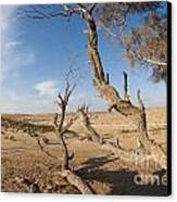 Desert Tamarix Trees Canvas Print by Dan Yeger