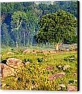 Devil Den's Witness Tree Canvas Print by William Fox