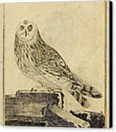 Die Stein Eule Or Church Owl Canvas Print by Philip Ralley