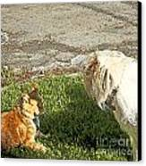 Dog And Cat Discuss Canvas Print by Artist and Photographer Laura Wrede