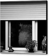 Dog In A Window Canvas Print by Fabrizio Troiani