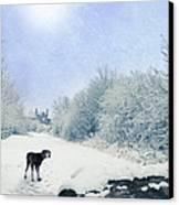 Dog Looking Back Canvas Print by Amanda Elwell