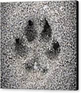 Dog Paw Print In Sand Canvas Print by Elena Elisseeva