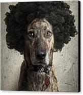 Dog With A Crazy Hairdo Canvas Print by Chad Latta