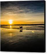 Doggy Sunset Canvas Print by Puget  Exposure