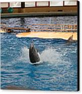 Dolphin Show - National Aquarium In Baltimore Md - 1212102 Canvas Print by DC Photographer