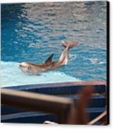 Dolphin Show - National Aquarium In Baltimore Md - 1212104 Canvas Print by DC Photographer