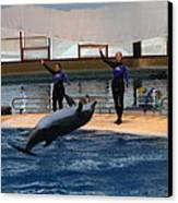 Dolphin Show - National Aquarium In Baltimore Md - 1212139 Canvas Print by DC Photographer
