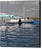 Dolphin Show - National Aquarium In Baltimore Md - 121219 Canvas Print by DC Photographer