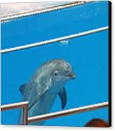 Dolphin Show - National Aquarium In Baltimore Md - 1212193 Canvas Print by DC Photographer
