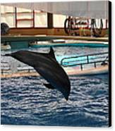 Dolphin Show - National Aquarium In Baltimore Md - 1212215 Canvas Print by DC Photographer
