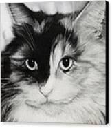 Domestic Cat Canvas Print by Natasha Denger