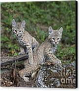 Double Trouble Canvas Print by Sandra Bronstein
