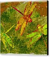 Dragonflies Abound Canvas Print by Jack Zulli