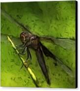 Dragonfly Macro Canvas Print by Jack Zulli