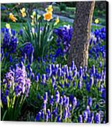 Dreaming Of Spring Canvas Print by Carol Groenen