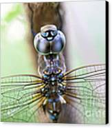 Dreaming With A Dragonfly Canvas Print by Scotts Scapes