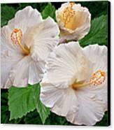 Dreamy Blooms - White Hibiscus Canvas Print by Ben and Raisa Gertsberg