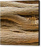 Driftwood 1 Canvas Print by Adam Romanowicz