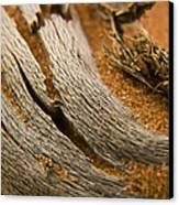 Driftwood 2 Canvas Print by Adam Romanowicz