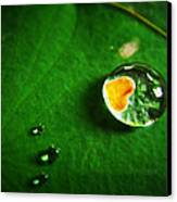 Droplet Of Love Canvas Print by Suradej Chuephanich