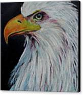 Eagle Eye Canvas Print by Jeanne Fischer