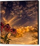 Echinacea Sunset Canvas Print by Bob Orsillo