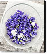 Edible Violets  Canvas Print by Elena Elisseeva