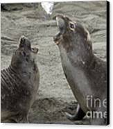 Elephant Seal Confrontation Canvas Print by Mark Newman