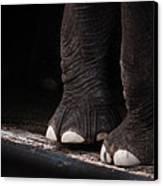 Elephant Toes Canvas Print by Bob Orsillo
