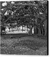 Embraced By Trees Canvas Print by Douglas Barnard