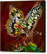 Enchanted Butterfly. First.  Canvas Print by Tautvydas Davainis