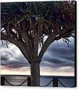 Encinitas Sunset Canvas Print by Carol Leigh
