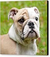 English Bulldog Puppy Canvas Print by Natalie Kinnear