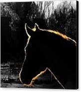 Equine Glow Canvas Print by Steven Milner